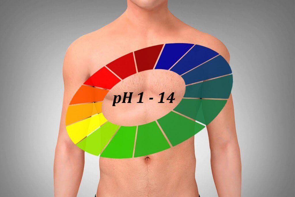 Защо е важно регулирането на киселинността в човешкото тяло?