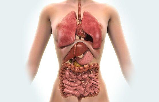 човешко тяло и органи